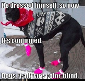 He dressed himself, so now It's confirmed: Dogs really are color-blind.