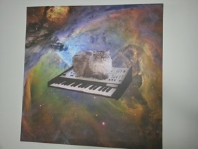 Keyboard Cat, in Space!