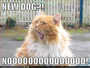 NEW DOG?!  NOOOOOOOOOOOOOOO!