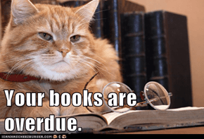Librarian Cat is Not Amused