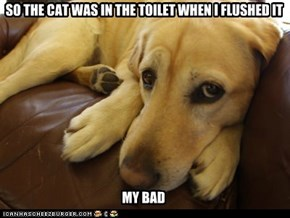 SO THE CAT WAS IN THE TOILET WHEN I FLUSHED IT