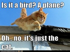 Is it a bird? A plane?  Oh.. no, it's just the cat.