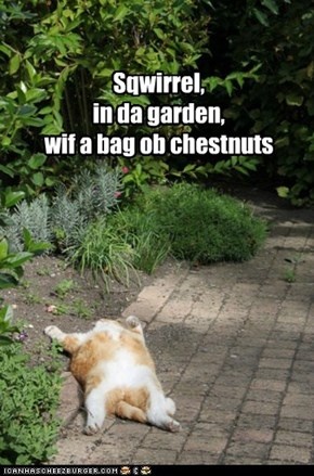 Clue: LOLcat Edition