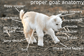 A Very Accurate and Extremely Scientific Chart on Goat Anatomy