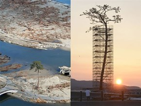 Two Years After the Tsunami, Japan Preserves a Lone Surviving Tree