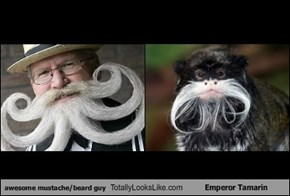 awesome mustache/beard guy Totally Looks Like Emperor Tamarin