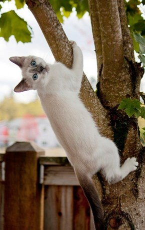 Cyoot Kitteh of teh Day: Getting Back to Nature