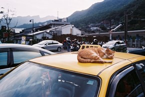Cyoot Kitteh of teh Day: This Taxi is Currently Out of Service