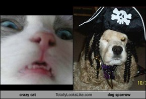 crazy cat Totally Looks Like dog sparrow