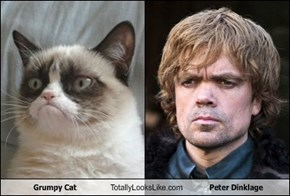 Grumpy Cat Totally Looks Like Peter Dinklage