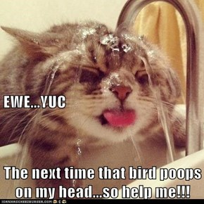 EWE...YUC The next time that bird poops on my head...so help me!!!