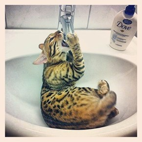 Cyoot Kitteh of teh Day: Tastes Like Hydration