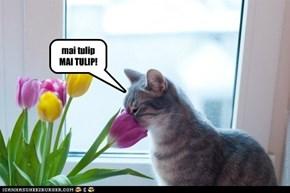 Tulip god