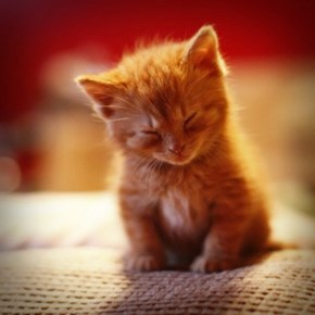 Cyoot Kitteh of teh Day: Cat Nap