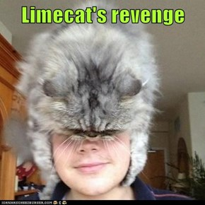 Limecat's revenge