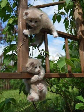 Cyoot Kitteh of teh Day: Halp!
