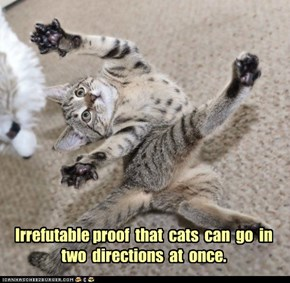 Irrefutable proof  that  cats  can  go  in two  directions  at  once.