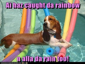 Ai haz caught da rainbow  n alla da rain too!