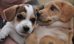 Cyoot Puppy ob teh Day: Bosom Buddies