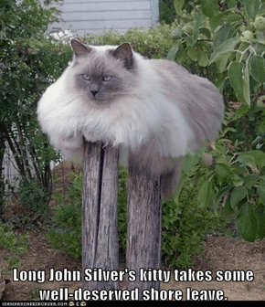 Long John Silver's kitty takes some well-deserved shore leave.