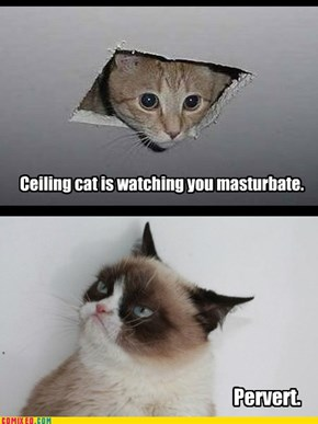Pervy cat.