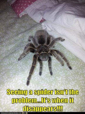 Seeing a spider isn't the problem...It's when it disappears!!!