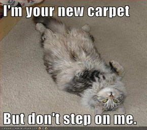 I'm your new carpet  But don't step on me.