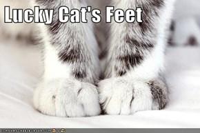 Lucky Cat's Feet