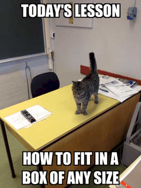 Welcome to Feline Cultural Studies 101