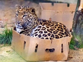 All Cats Like Boxes