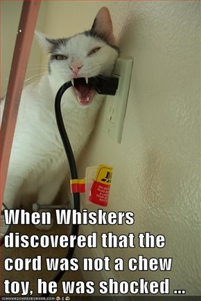 When Whiskers discovered that the cord was not a chew toy, he was shocked ...