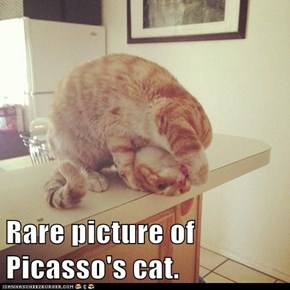 Rare picture of Picasso's cat.
