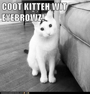 COOT KITTEH WIT EYEBROWZ!