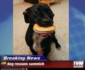 Breaking News - dog rescues sammich