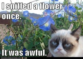 I sniffed a flower once.  It was awful.