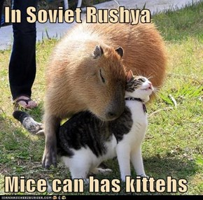 In Soviet Rushya  Mice can has kittehs