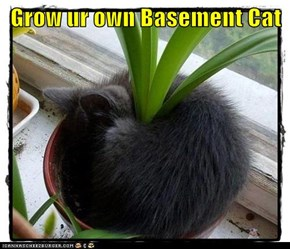 Grow ur own Basement Cat