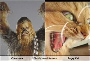 Chewbaca Totally Looks Like Angry Cat