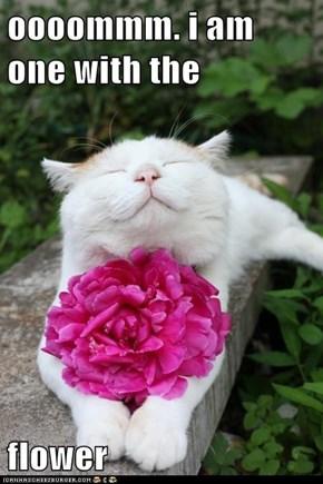 Zen Cat is Zen