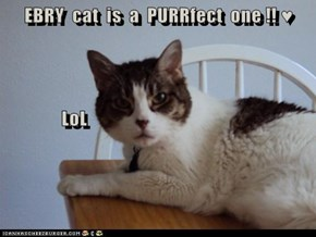 EBRY  cat  is  a  PURRfect  one !! ♥                LoL