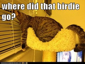 where did that birdie go?