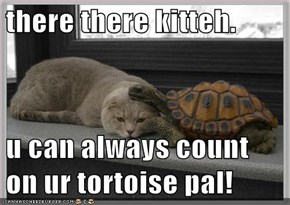 there there kitteh.  u can always count on ur tortoise pal!