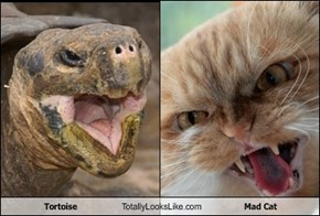 Tortoise Totally Looks Like Mad Cat