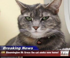 Breaking News - Bloomington IN: Grace the cat seeks new home!