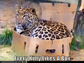 Every Kitty Likes A Box