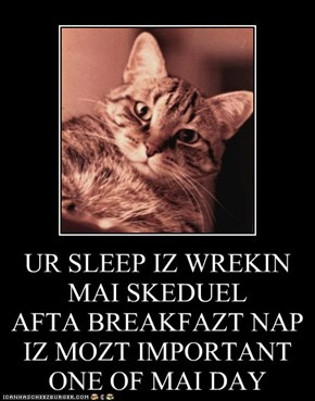 UR SLEEP IZ WREKIN MAI SKEDUEL AFTA BREAKFAZT NAP IZ MOZT IMPORTANT ONE OF MAI DAY
