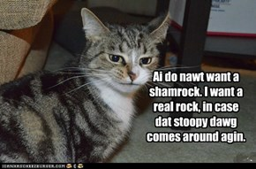 "Confused Kitteh is Confused About ""Sham"" Rocks"