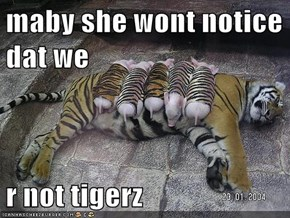 maby she wont notice dat we  r not tigerz