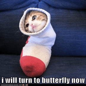 i will turn to butterfly now