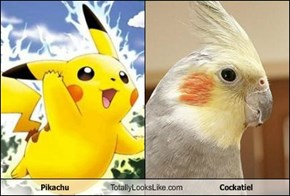Pikachu Totally Looks Like Cockatiel